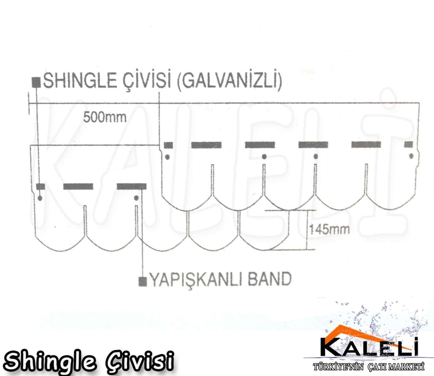 Shingle Çivisi